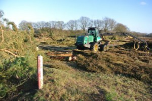 K38 bomen kappen