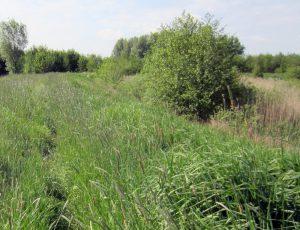 hoog_gras