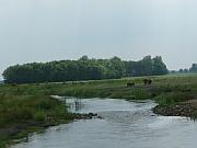 K42-torenveen_meander