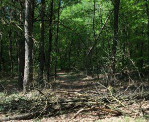Bijna verdwenen bospad in de Knapzakroute Wapse.